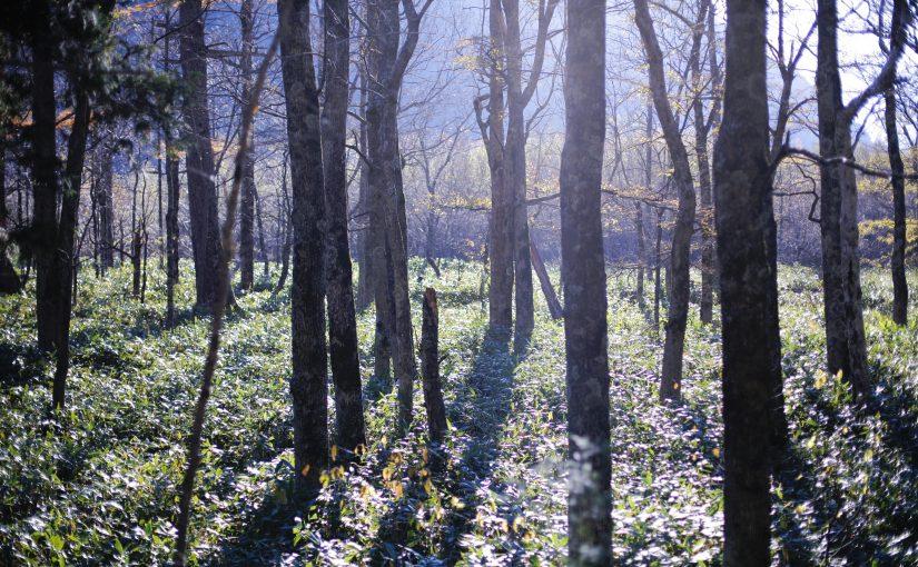 東西南北  沼畑直樹